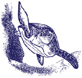 dc_turtle
