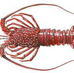 All lobsters