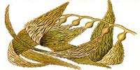 kelp_indic