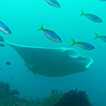 Shadow reef, Raja Amput, Indonesia