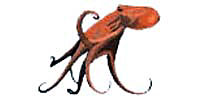 octopus_giant