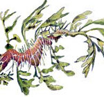 Seadragons: weedy and leafy