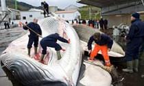 whale_170613