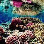 Most species-rich coral reefs are not necessarily protected