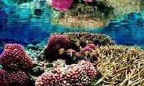 coral-reef_010713