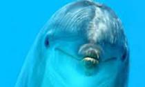 dolphin_230713