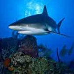 WWF urges Med countries to save sharks