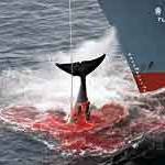 Celebrities call on Japan to scrap resumption of whaling