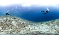 Caribbean Coral Loss