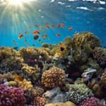 coral-reef_300813