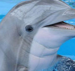 Dolphin radar could help detect bombs