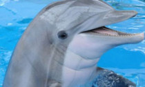 dolphin_291013