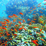 Coral reefs 'moving towards the Poles to escape Climate Change'