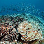 Indonesia's Coral Reefs Get World Bank Loan