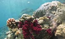 reef_120214