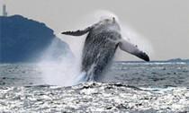 whale_050314