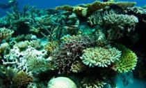 Western Australia Reef