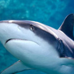 Why global media must change negative agenda towards sharks