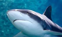 shark_250414