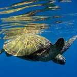 Laws need reshaping to protect sea turtles