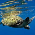 sea-turtle_210514