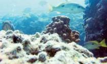 Persian gulf's declining reefs