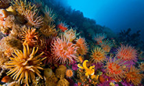 soft-coral_300614