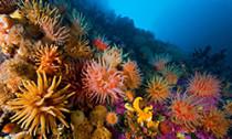 soft corals