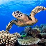 turtle_230714