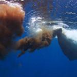 whale-poo_160714