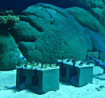 WA corals stunted by marine heat wave
