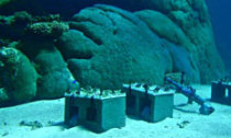 WA scientists measuring coral growth have found temperature stress continues to hamper reef survival