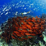 The Coral Triangle 'greatest repository of marine life'