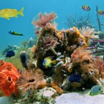 Australia Invests $379 Million to Save the Great Barrier Reef