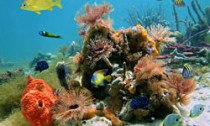 Cuba reefs