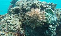 starfish_040615