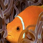 New Marine Parks Protect 290,000 Square Miles of Ocean