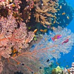 Coral bleaching threat rises in the Great Barrier Reef