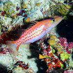 new-species_270716