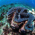 coral-castles_160816