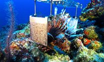 electrocuting lion fish