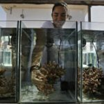 Reefs take the heat of climate change in Red Sea