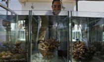 Coral Experiment