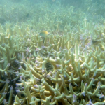 The ocean heatwave that killed a WA reef