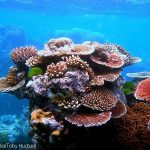 Sponges and Algae 'waging War on Caribbean Coral'