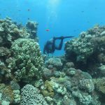 Coral reefs 'at make or break point', UN environment head says
