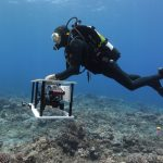 A diver uses a camera to capture images of coral