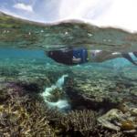 Reefs at risk of dissolving as oceans get more acidic