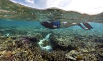 snorkeler over coral reef