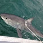 'Archaic' shark program to be abolished in Queensland